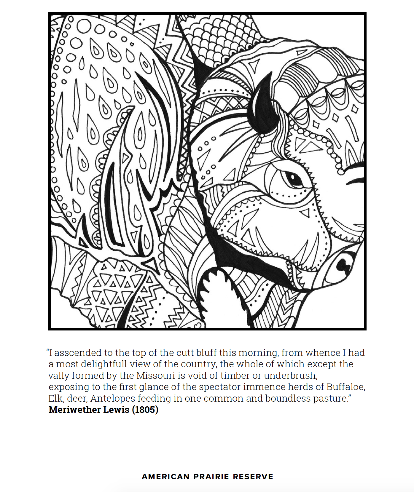 Free Buffalo Coloring Page To Download And Print At Home Or