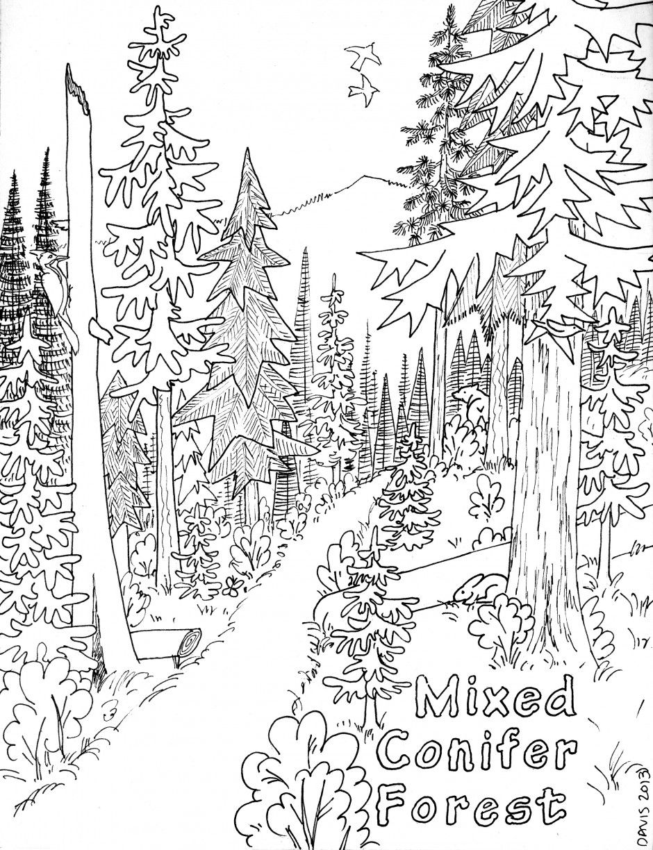 Nature+coloring+pages+for+adults | Coloring-pages-for-adults