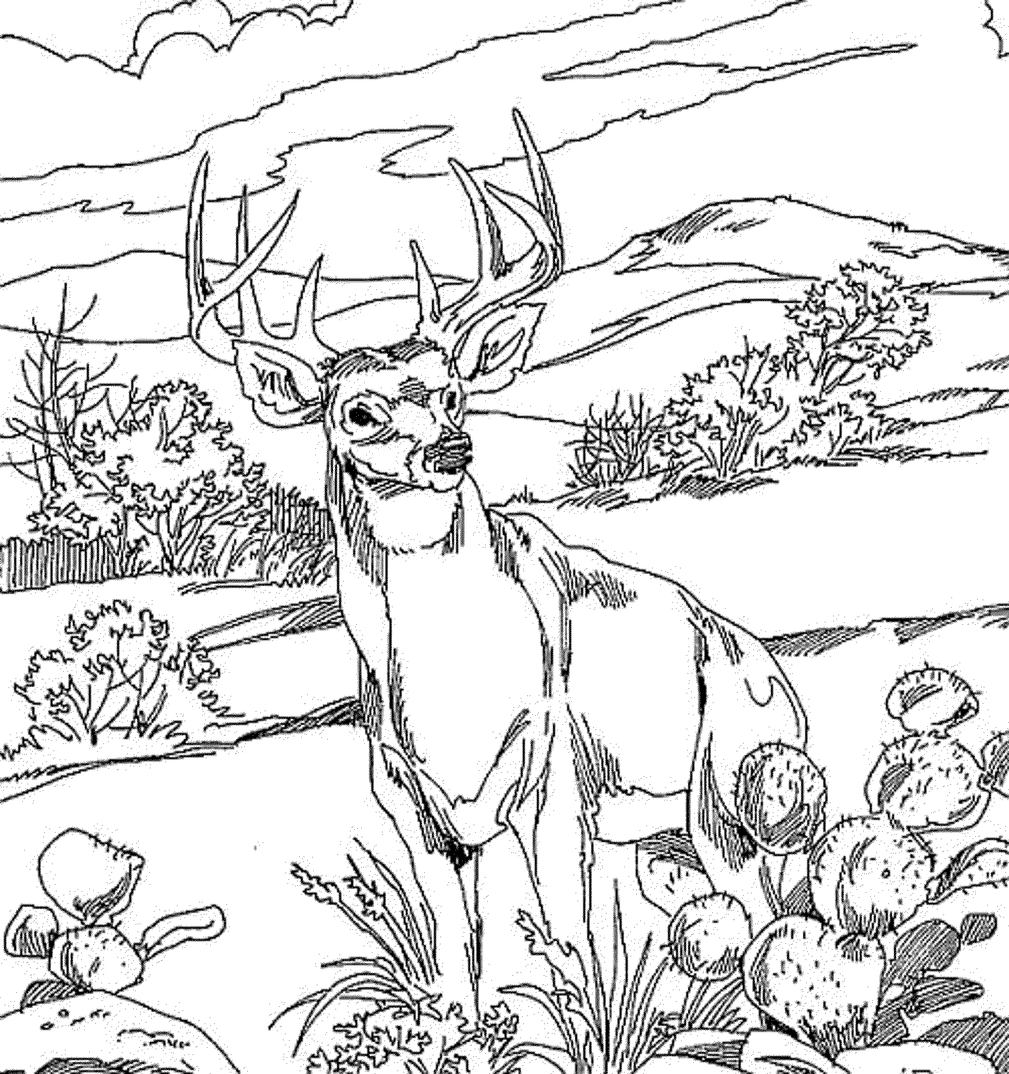 Realistic Deer Coloring Pages - Printable Kids Colouring