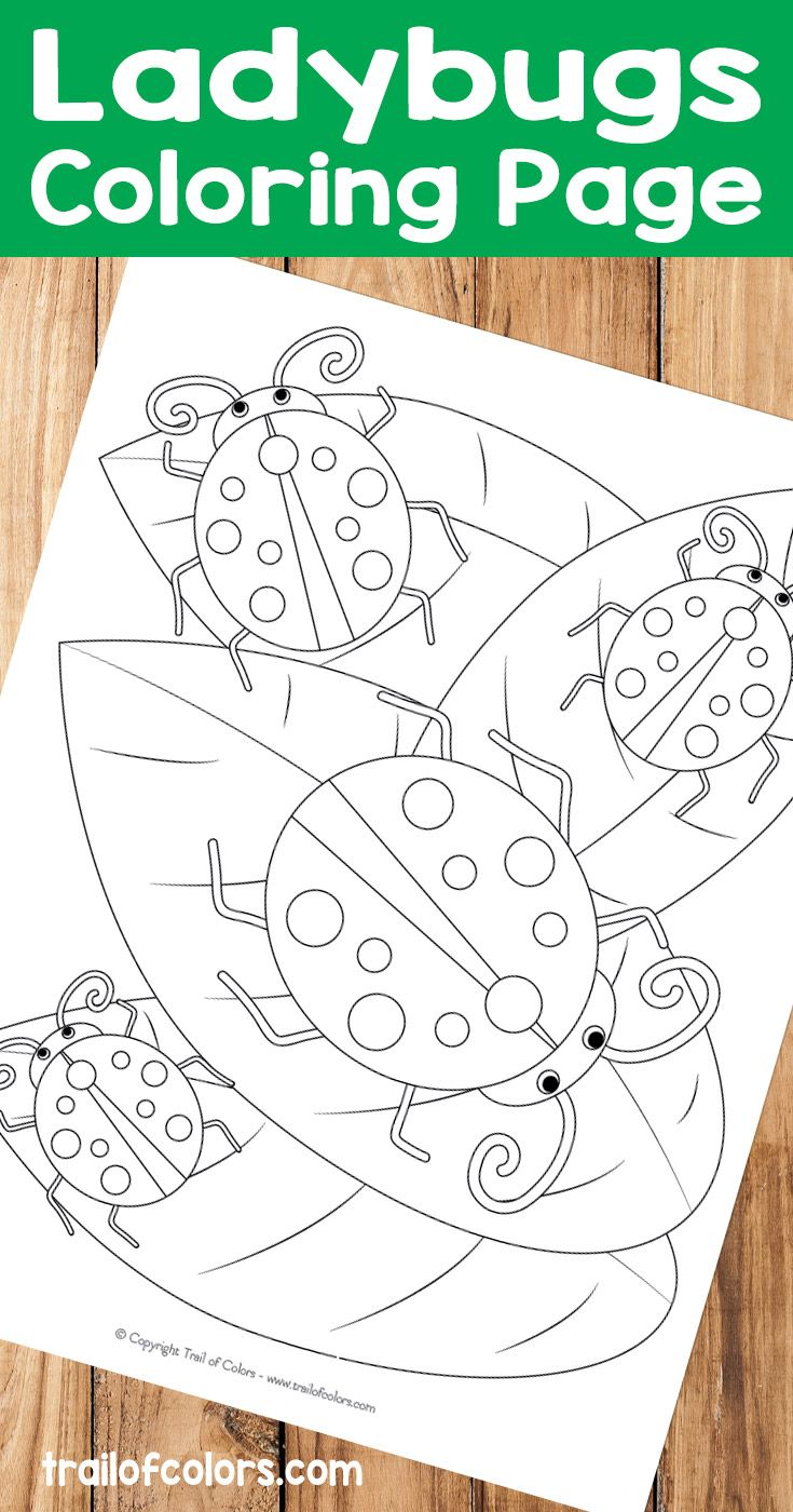 Ladybugs Coloring Page - Free Printable For Kids   May Ideas
