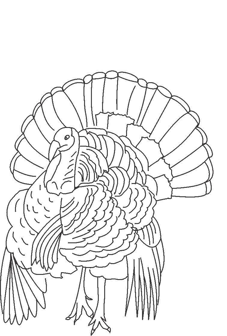 Free Printable Turkey Coloring Pages For Kids | Thanksgiving