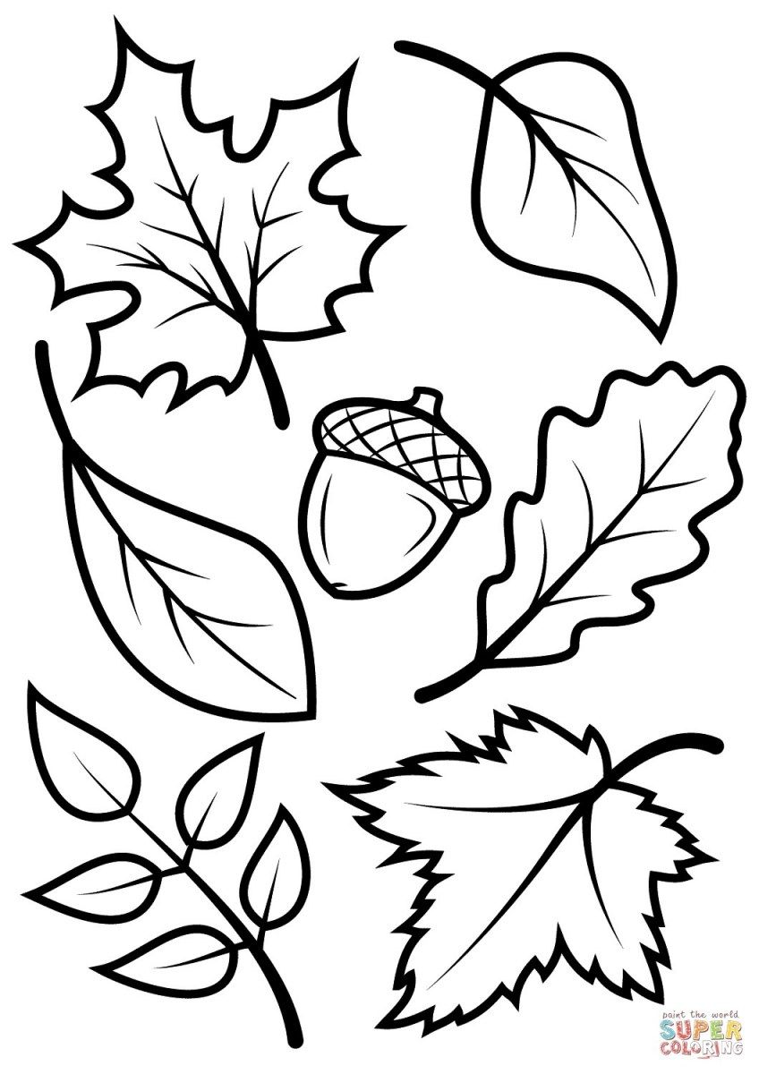 Fall Coloring Pages For Kids Fall Leaves And Acorn Coloring