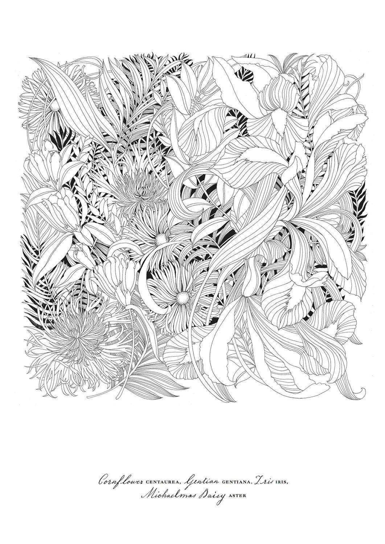 Floribunda A Flower Coloring Book By Leila Duly - World's