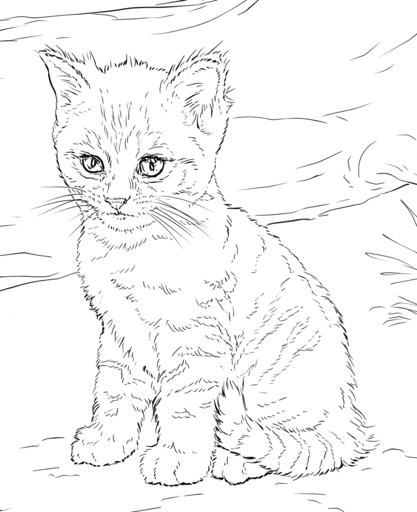 Cat Coloring Pages For Adults | Maling | Cat Coloring Page