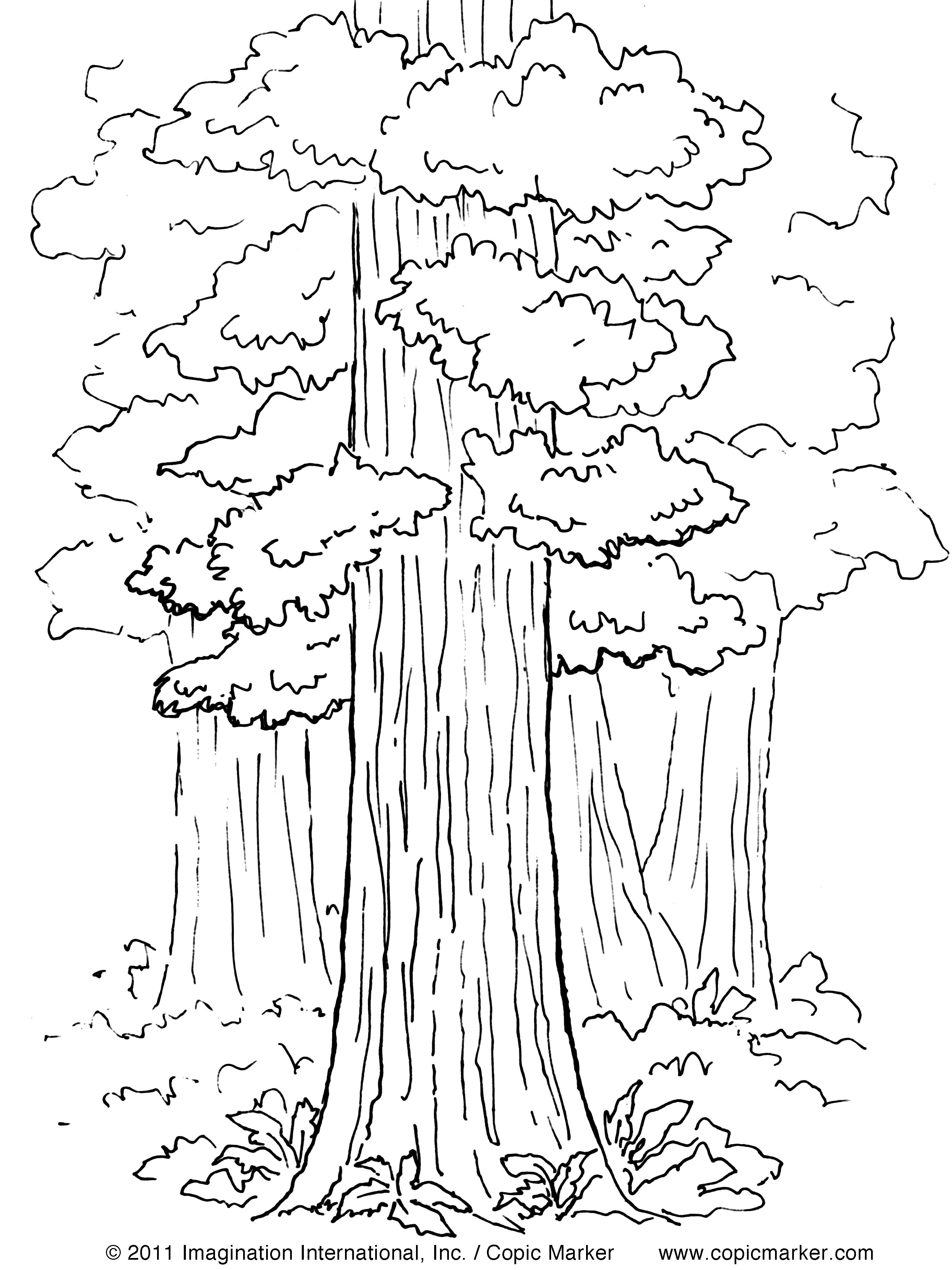 Copic Inspire | Copics | Tree Coloring Page, Coloring Pages