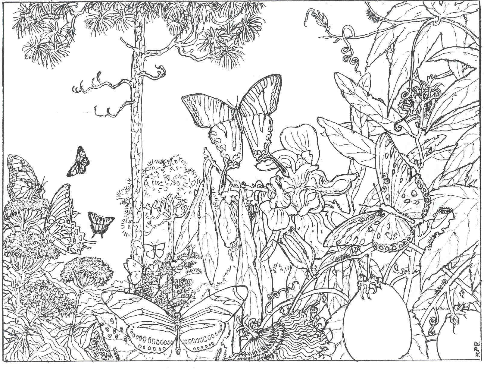 Hard Forest Scene Coloring Pages | The Longleaf Forest Is