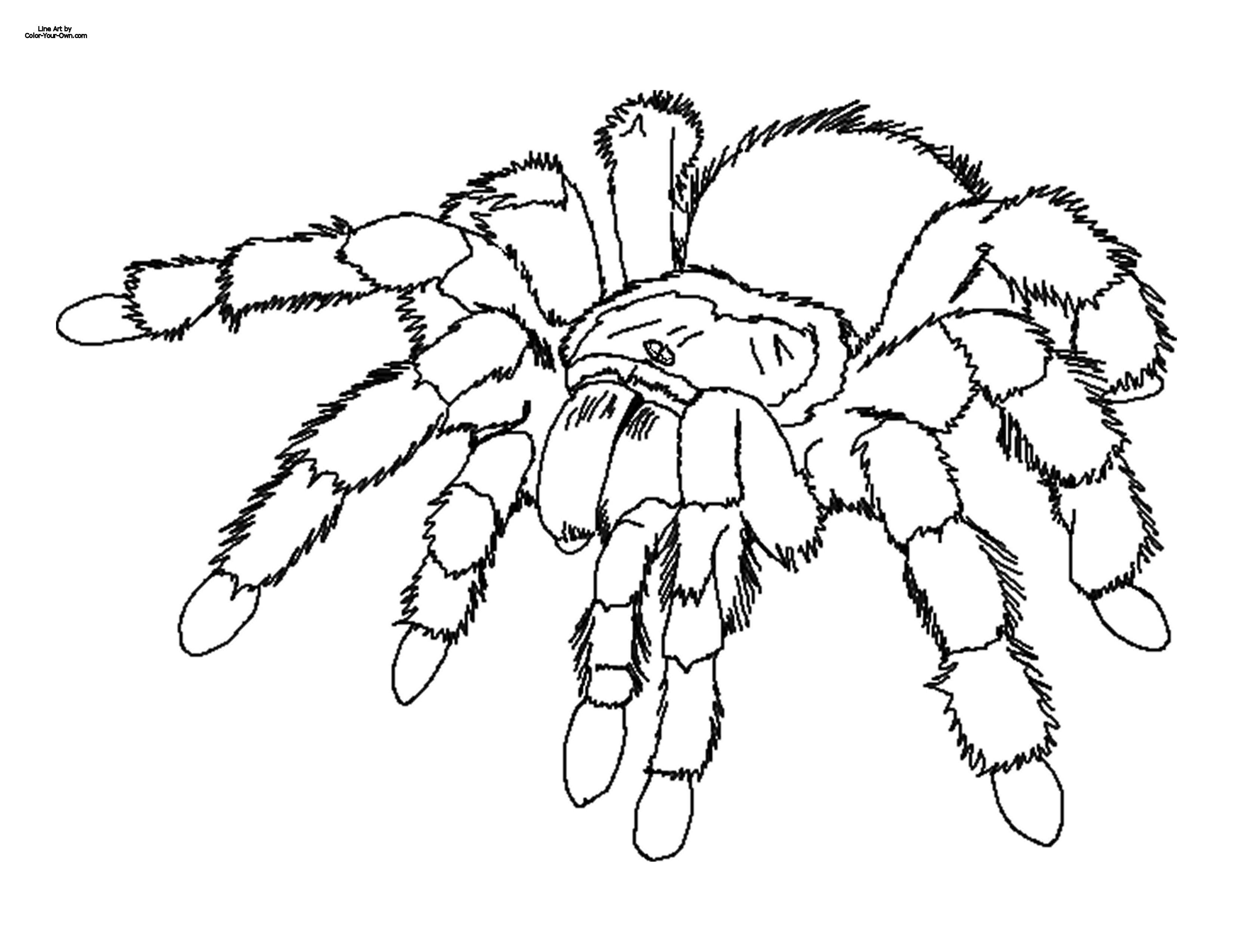 Image Detail For -tarantula Coloring Page | I Love Pets