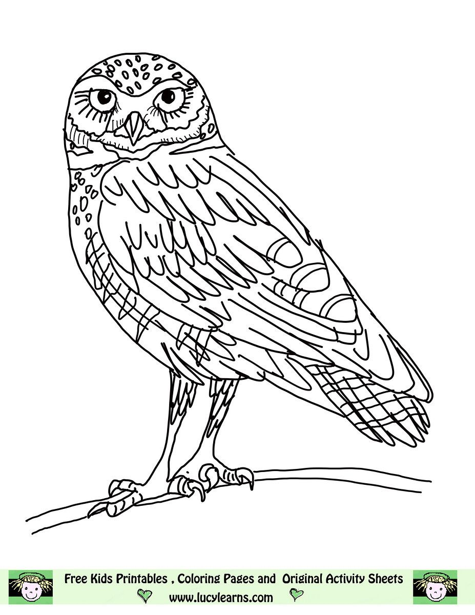 Owl Coloring Pages Free Printables | Owl Coloring Pages,lucy