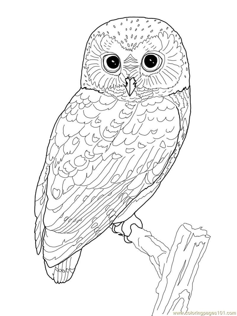 Printable Owl Coloring Page | Coloring Pages Owl (birds