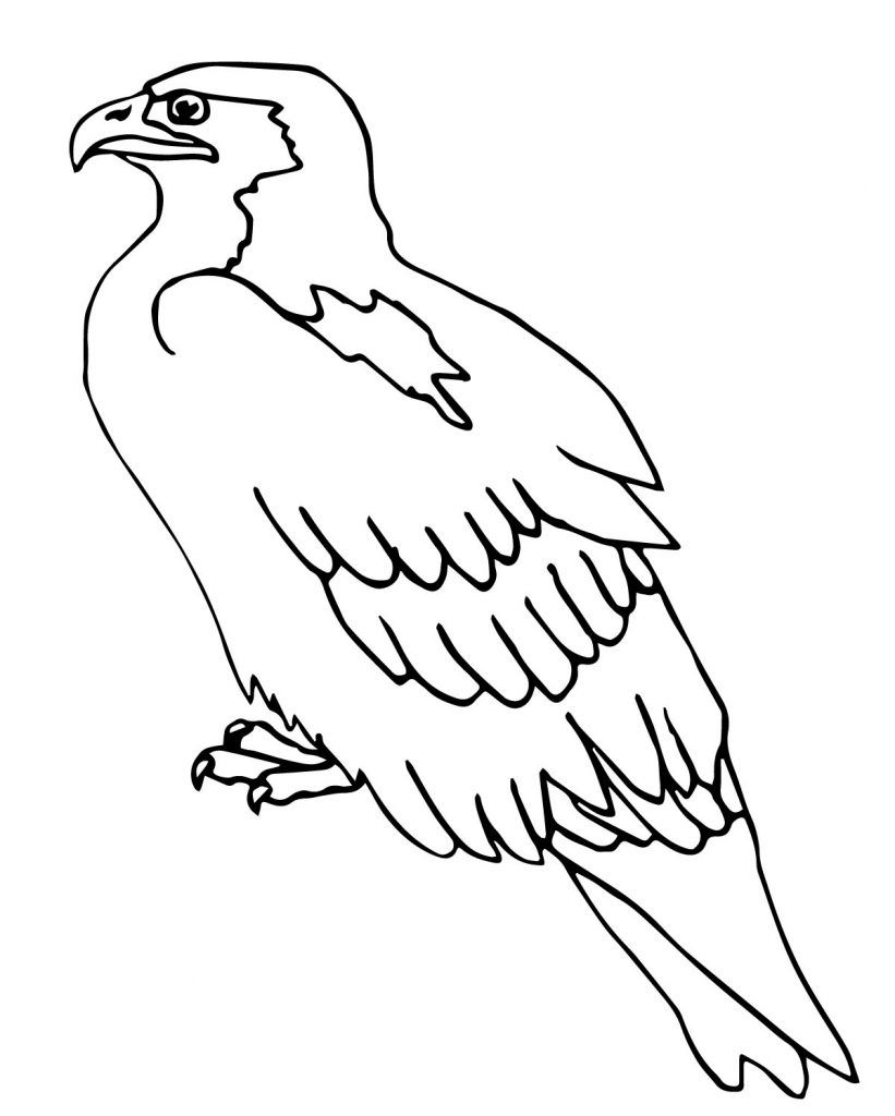 Hawk & Falcon Coloring Pages For Kids - Preschool And