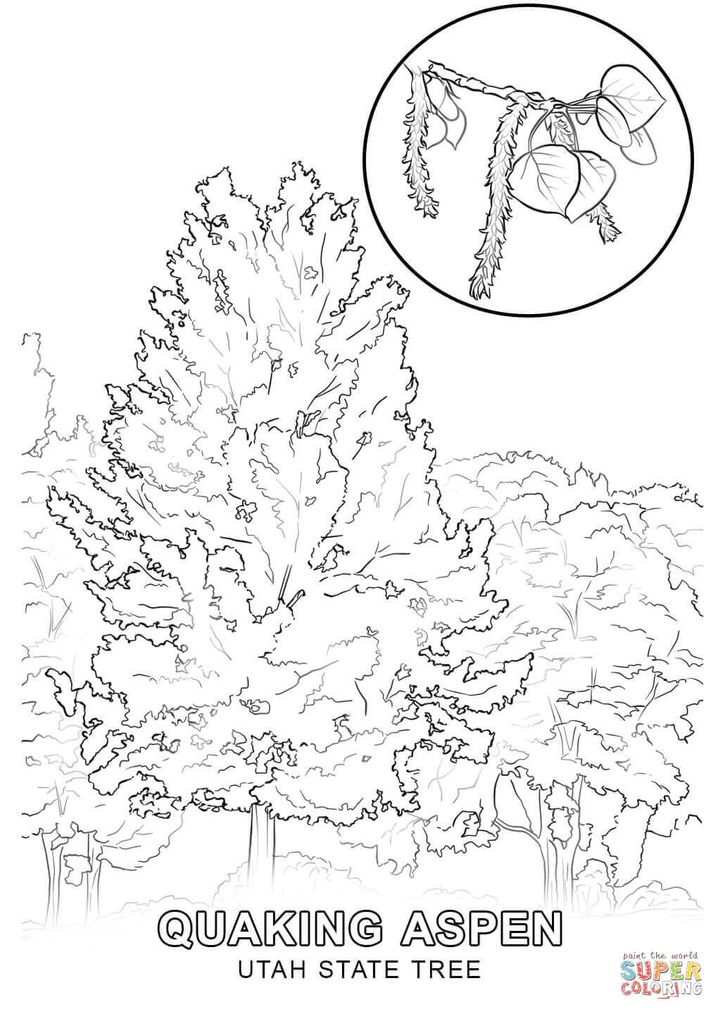 Click The Utah State Tree Coloring Pages To View Printable