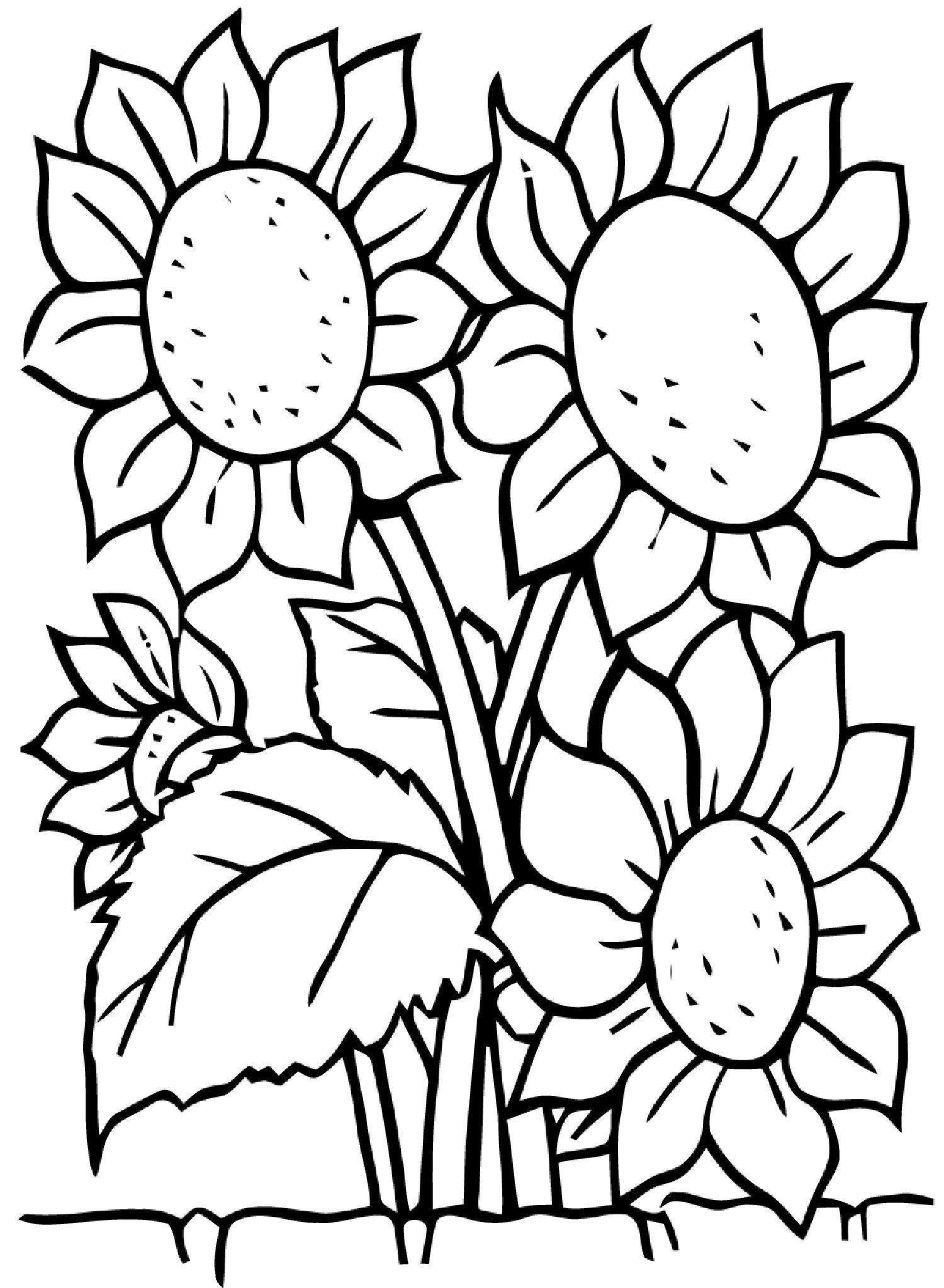 Sunflowers Flowers Coloring Pages For Kids To Print & Color