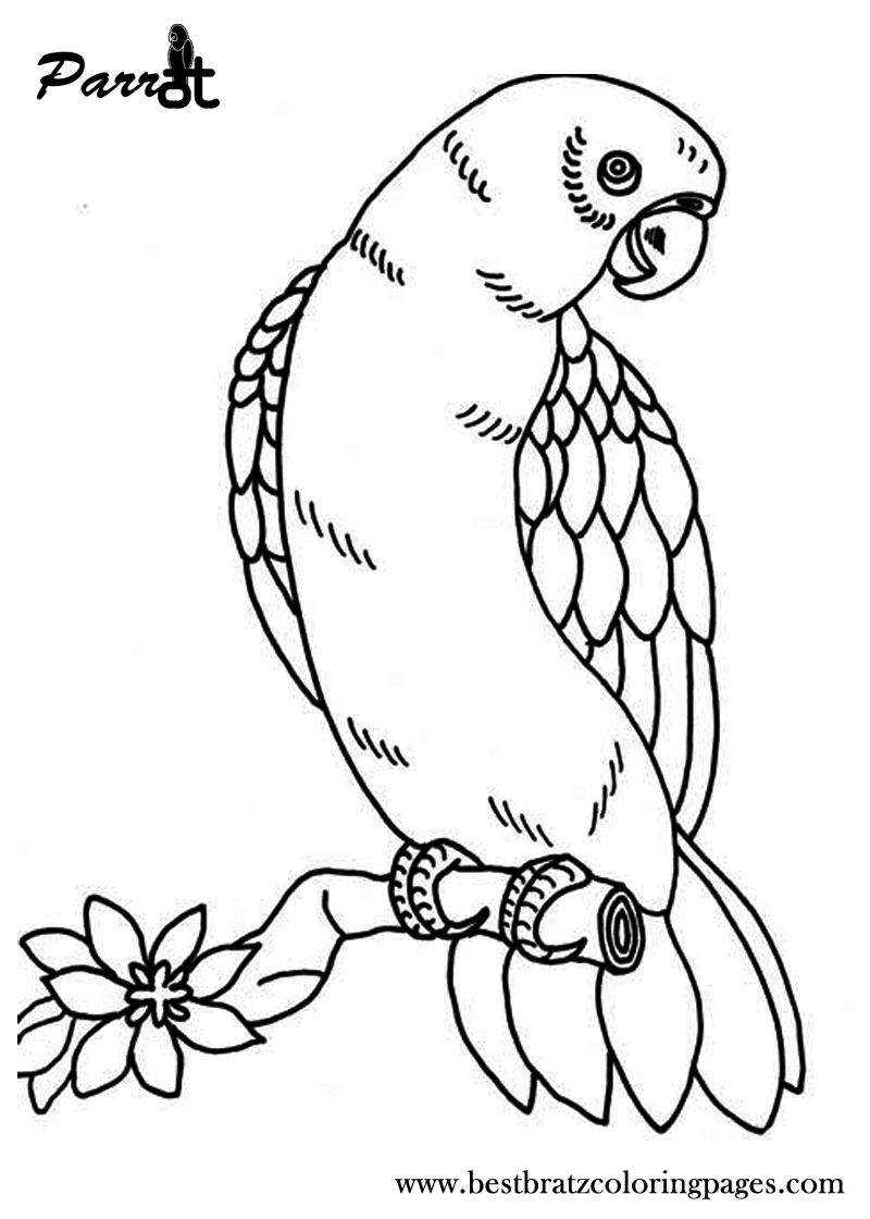 Free Printable Parrot Coloring Pages For Kids | Coloring