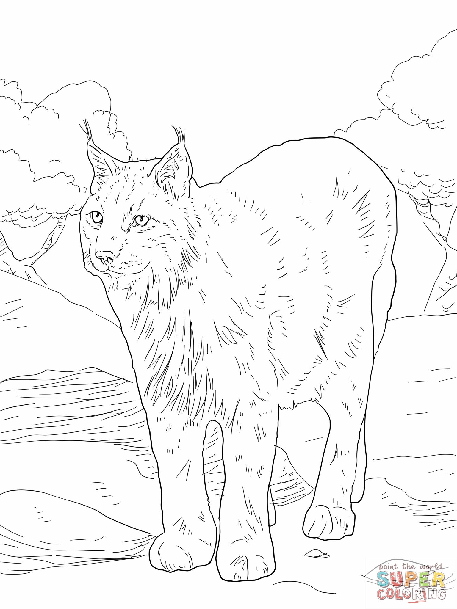 Bobcat Coloring Pages   Lynx Coloring Pages Eurasian Lynx