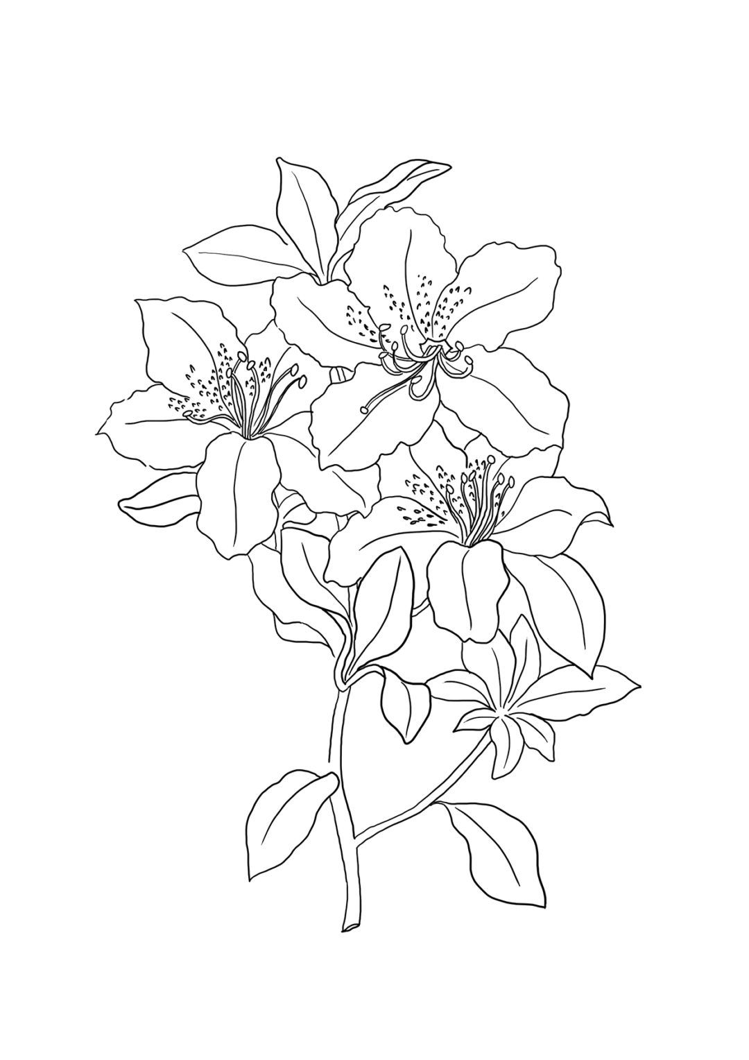 Flower Coloring Pages | Breakfast Party Declarations