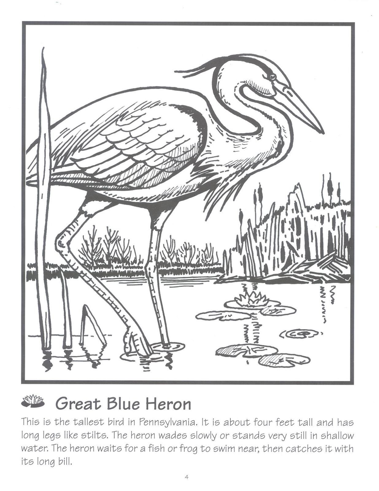 Blue Heron Coloring Page Urban Threads And Blue He | Eceap